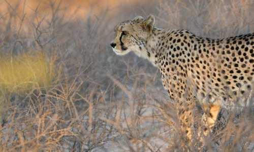 Kundengalerie-Kalahari-David-2019-19