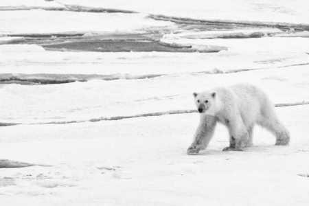 Kundengalerie-Dorina-Svalbard-05