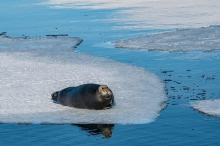 Kundengalerie-Dorina-Svalbard-08