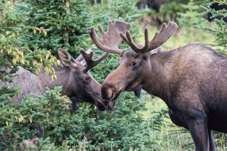 Fotogalerie-Kunden-Alaska-Erwin-Ramseier-10