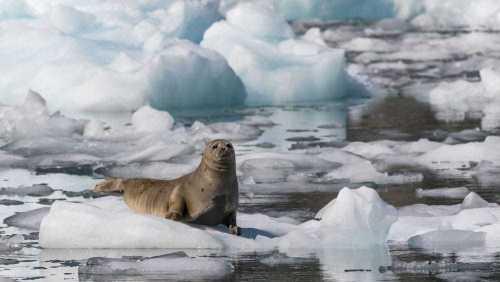 Fotogalerie-Kunden-Alaska-Erwin-Ramseier-12