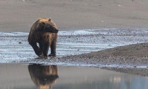 Fotogalerie-Kunden-Alaska-Erwin-Ramseier-15