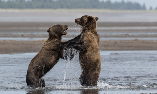 Fotogalerie-Kunden-Alaska-Erwin-Ramseier-17