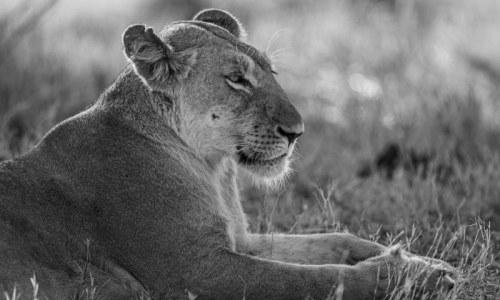 Fotogalerie-Kunden-Obergassel-Botswana-01