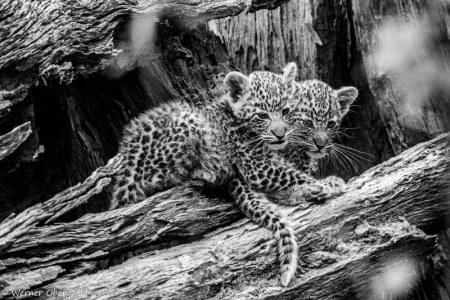 Fotogalerie-Kunden-Obergassel-Botswana-02