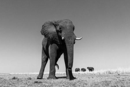 Fotogalerie-Kunden-Obergassel-Botswana-05