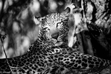 Fotogalerie-Kunden-Obergassel-Botswana-06