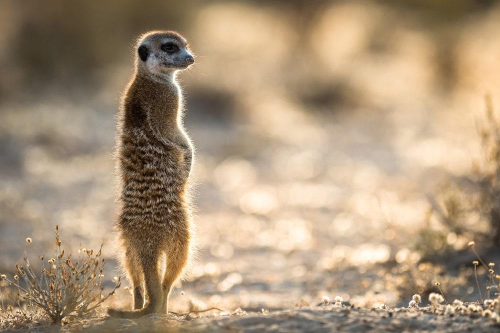 Blog Top Tipps Wildlife Fotos