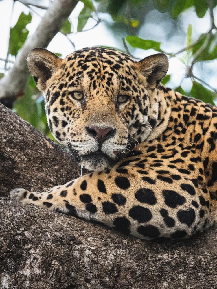 Fotoreise Pantanal