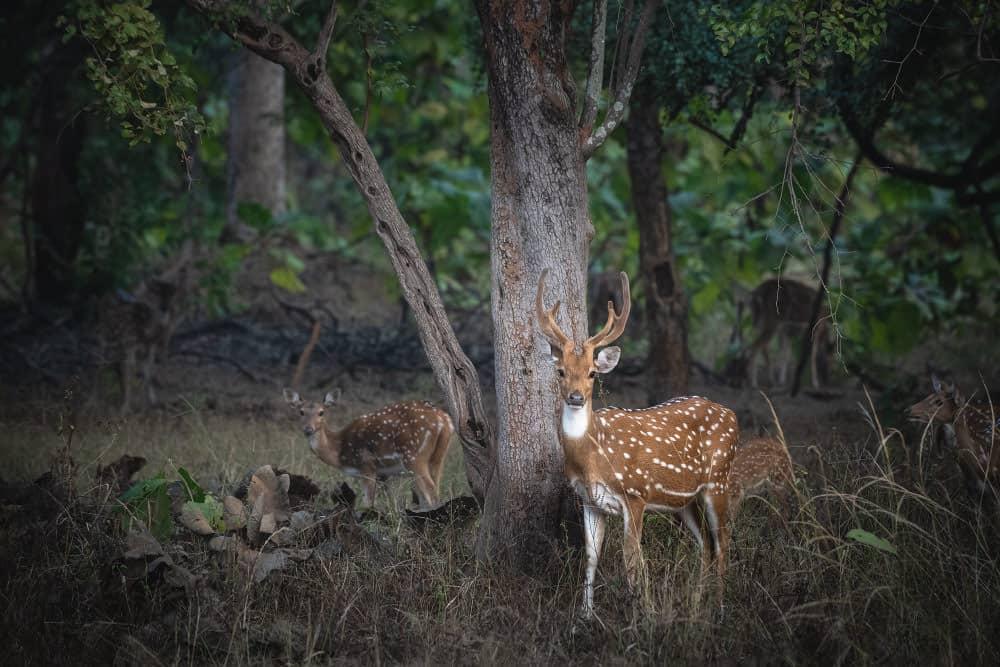 Fotoreise Indien