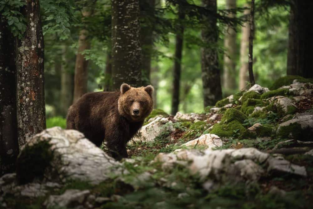 Fotoreise Bären