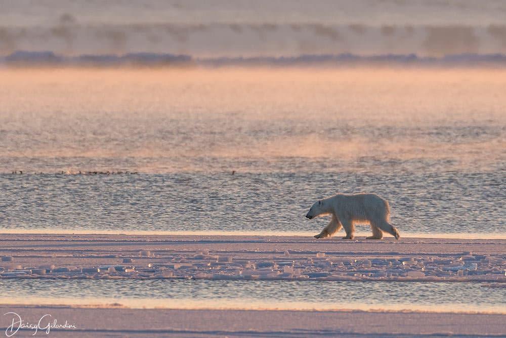 Fotoreise Svalbard