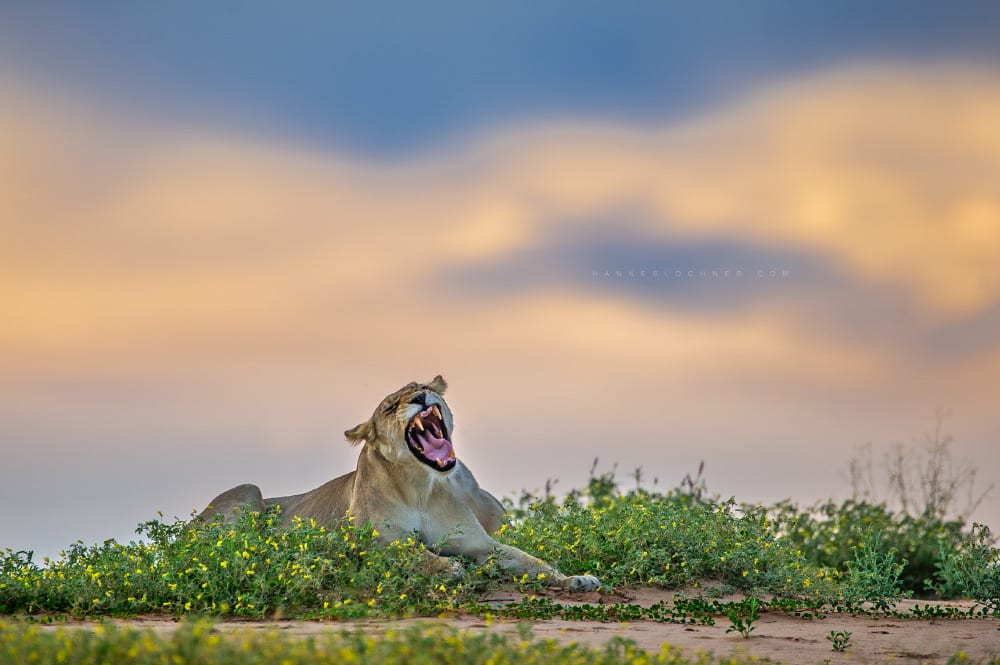 Fotoreise grüne Kalahari