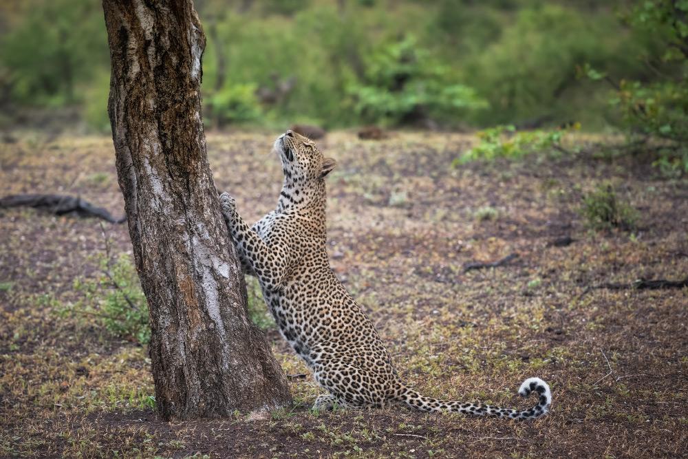Fotoreise Botswana's best kept secret
