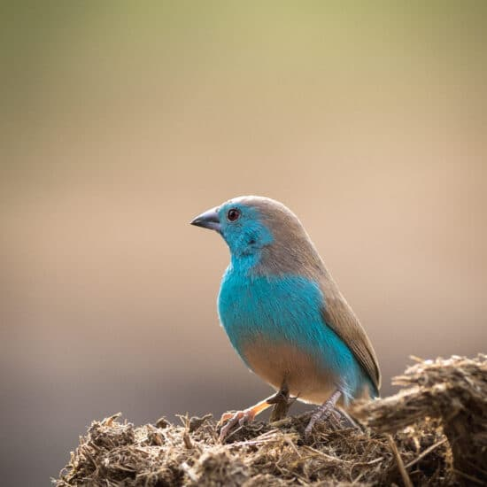 Fotoreise Botswana hautnah