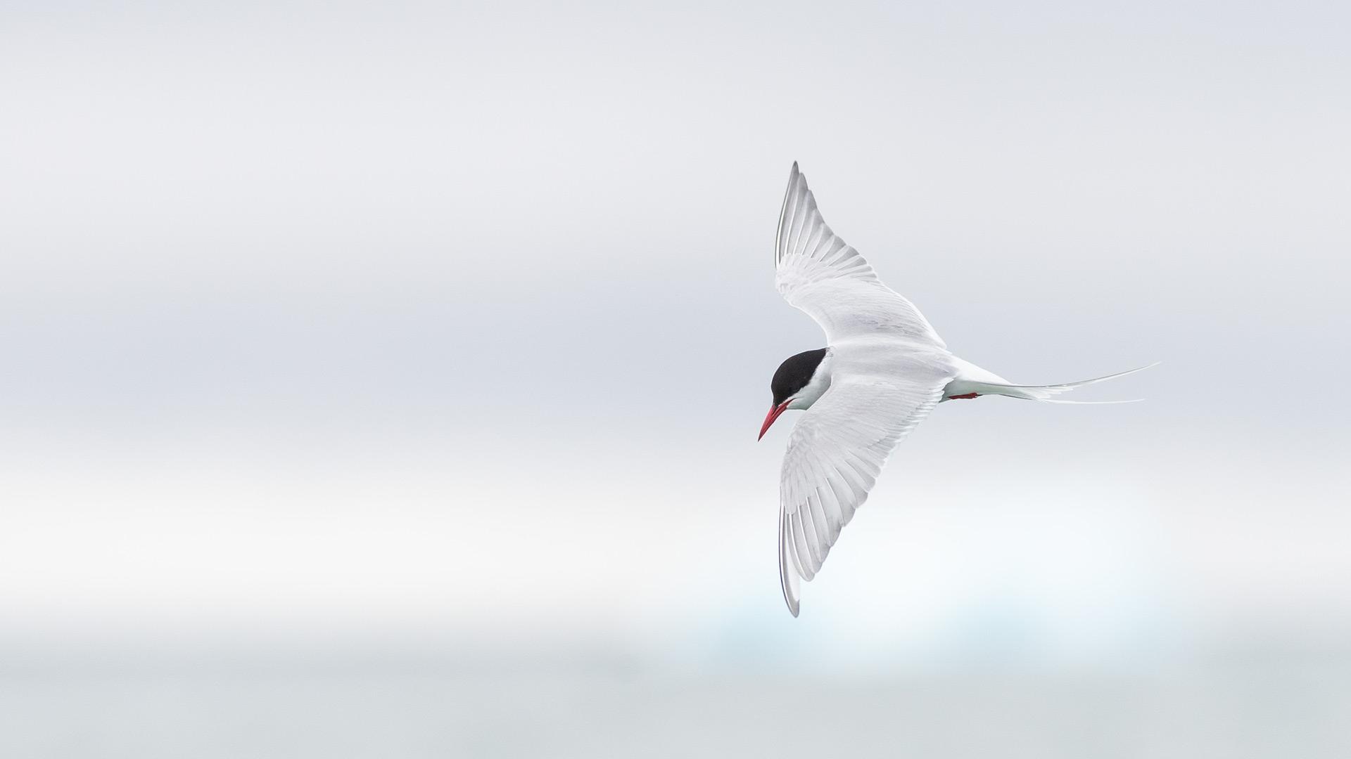 Blog Vögel im Flug
