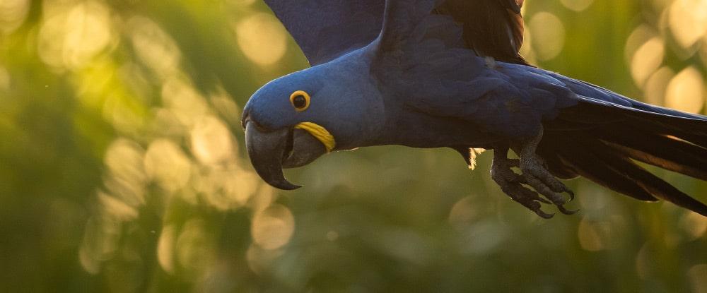 Banner Blog Reisebericht Pantanal