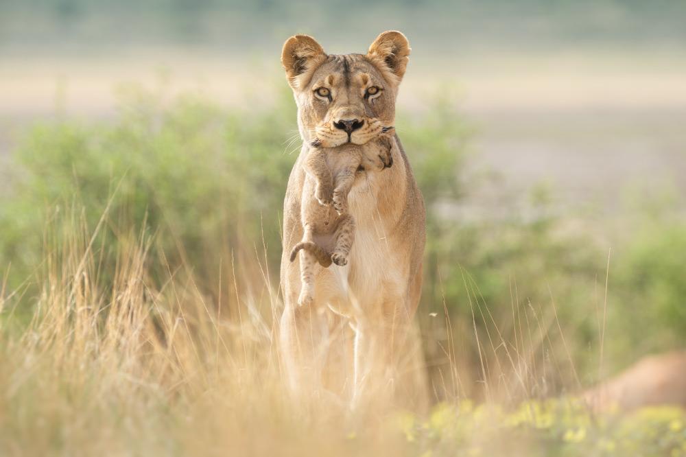 Blog Ausrüstung Wildlife