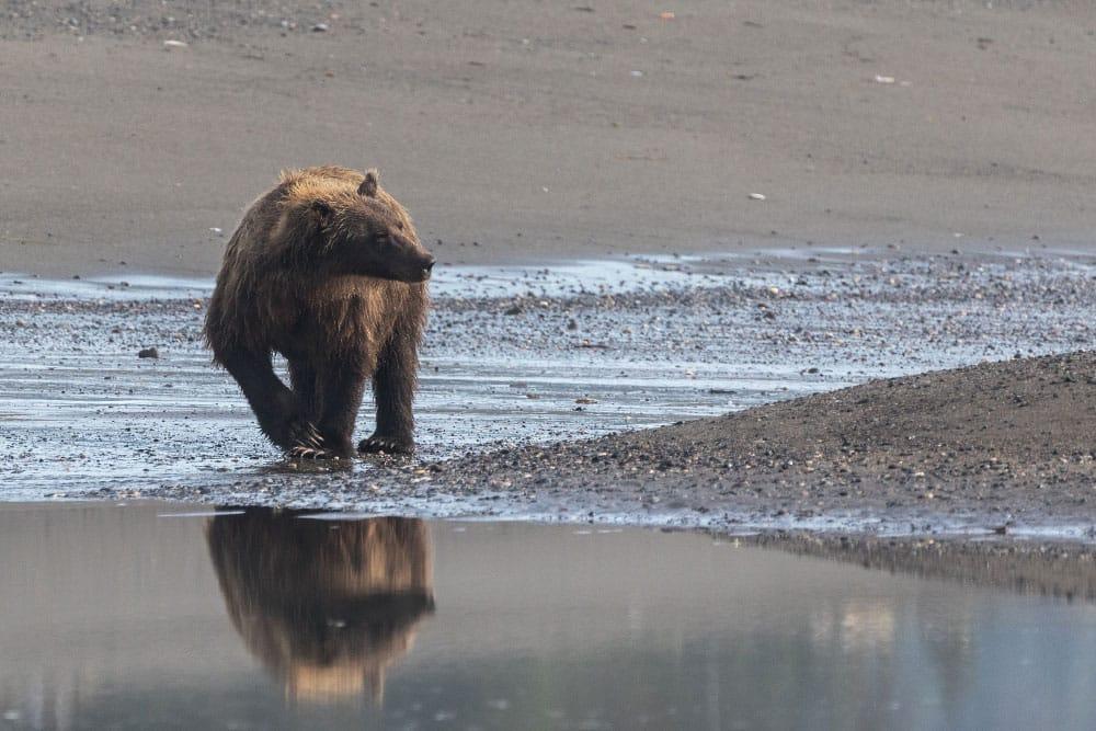 Urs Meier Alaska