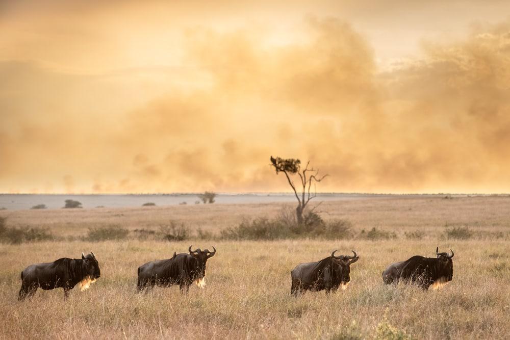 Fotoreise Kenia