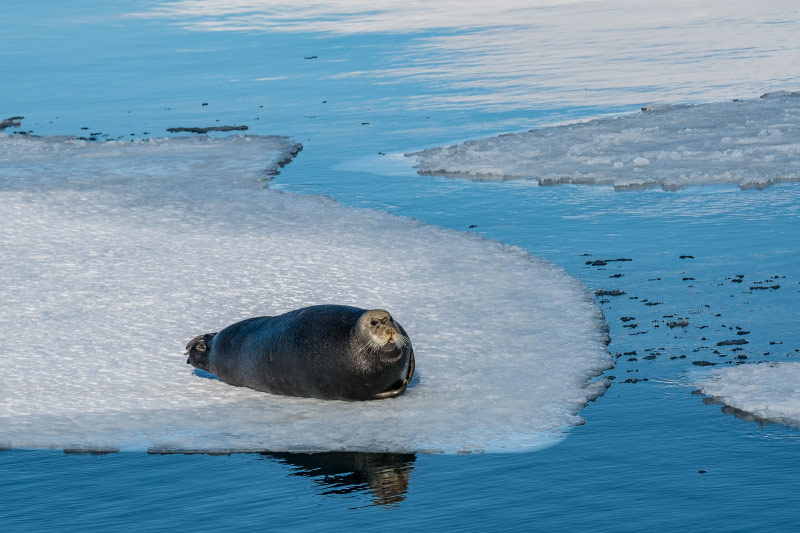 Dorina Heimsoth Svalbard