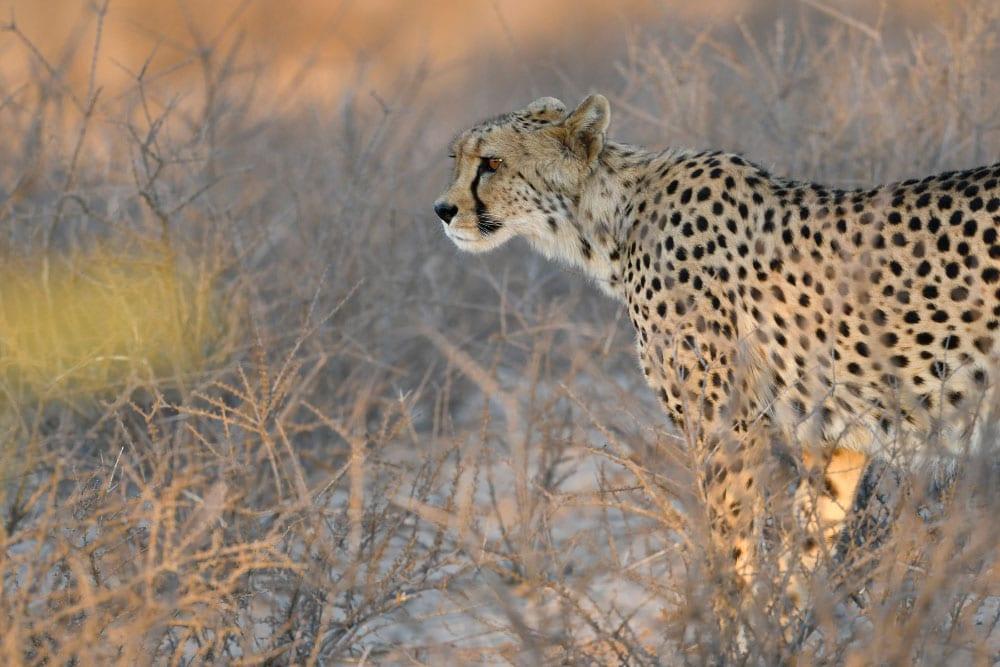 David Katzen Kalahari