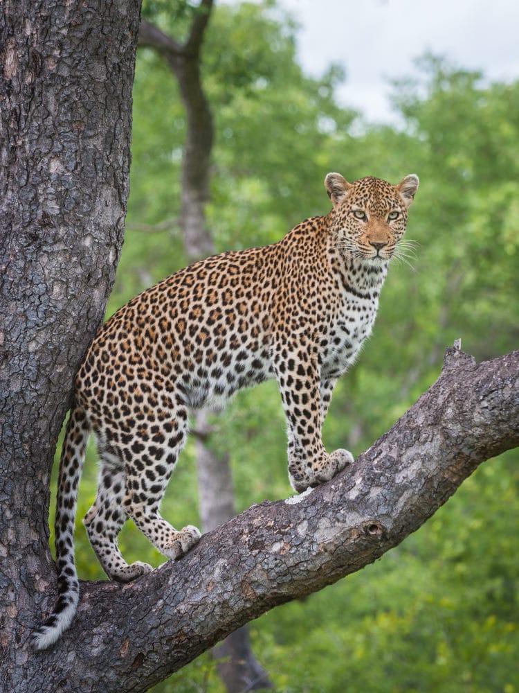 Fotoreise Südafrika