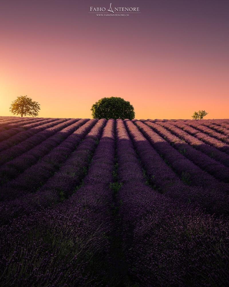 Fotoreise Valensole Provence