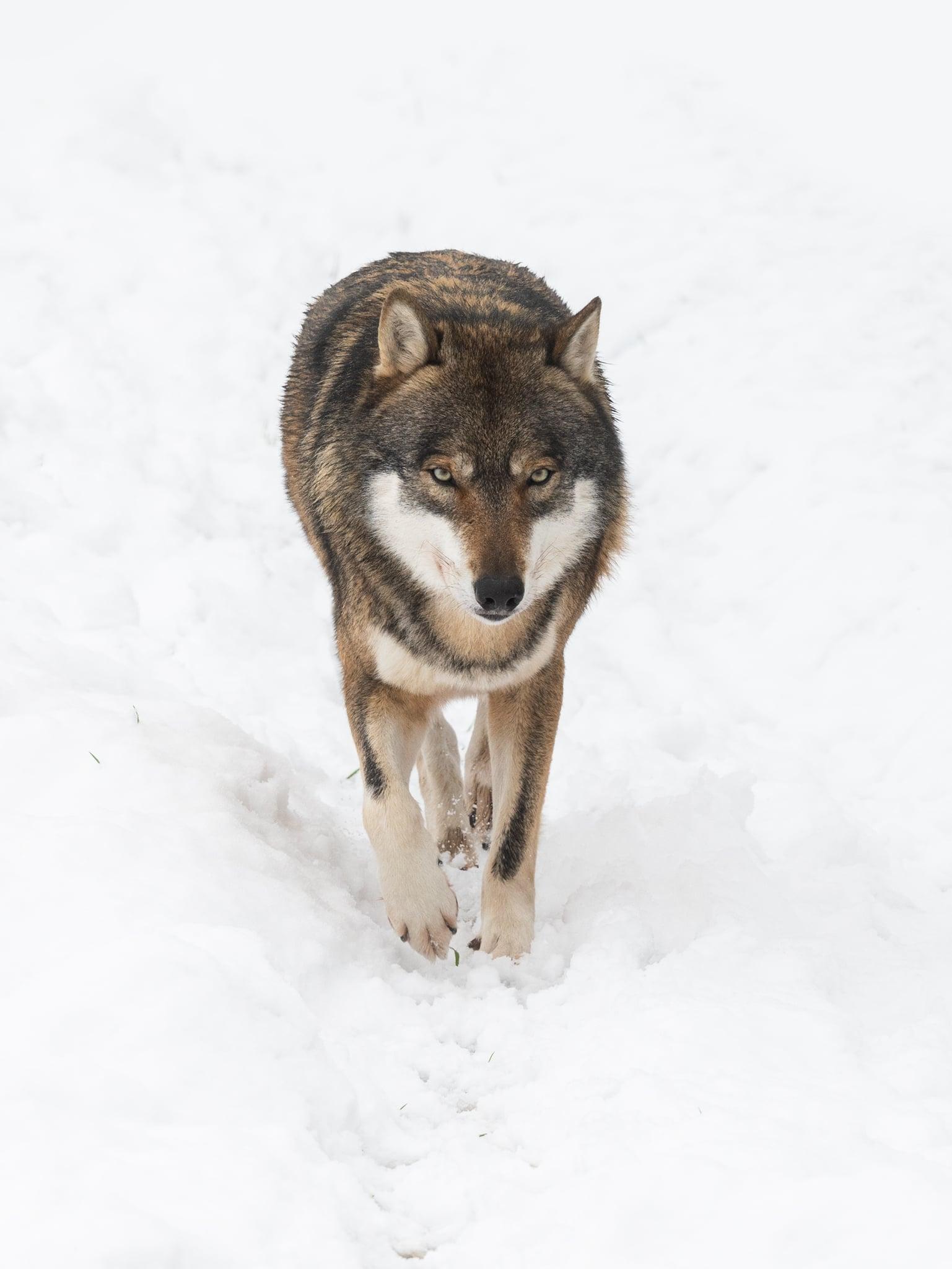 Fotoworkshop Tierfotografie
