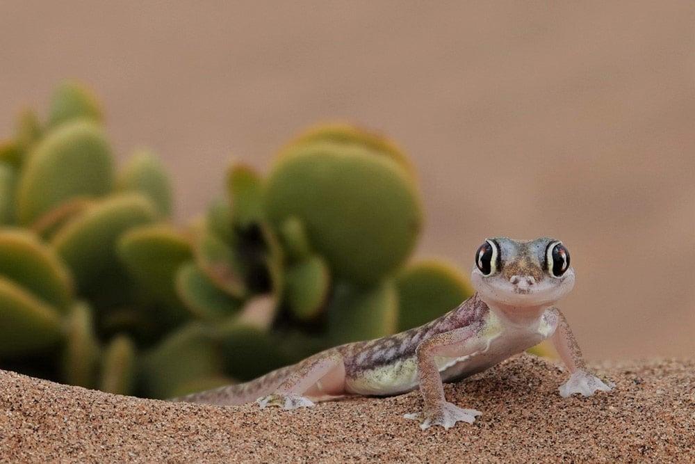 Kristina Meier, Namibia