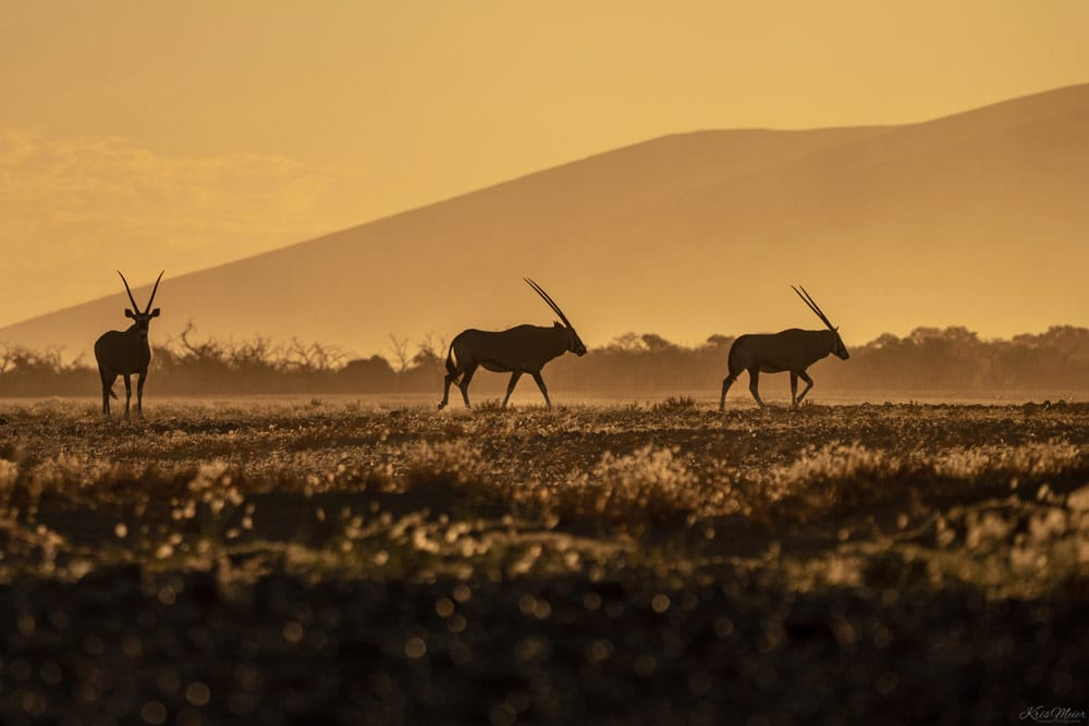 Kerstin Meier, Namibia