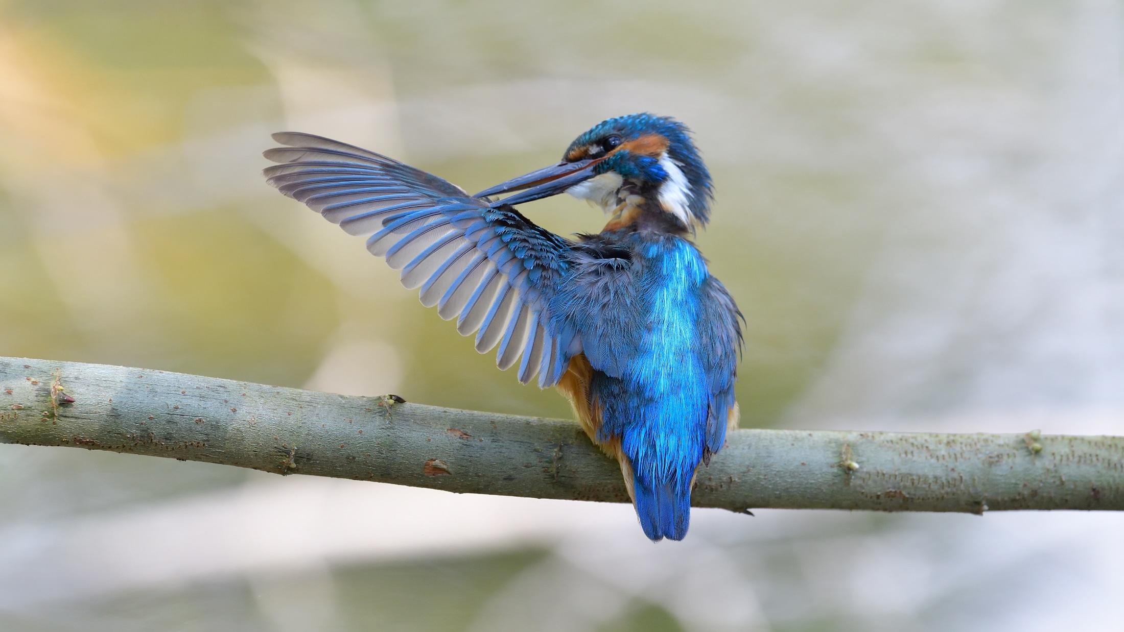 Fotoworkshop Vogelfotografie