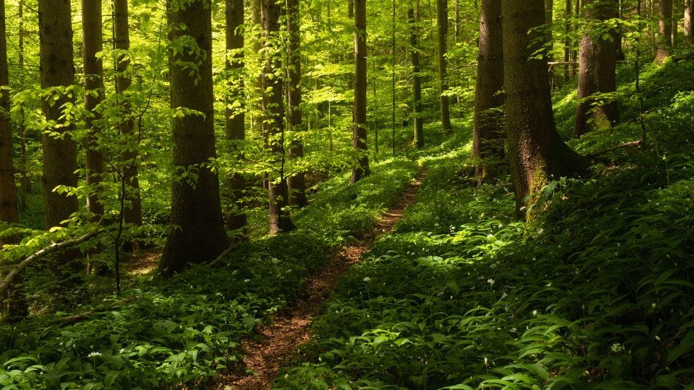 Banner Blog Nachhaltigkeit Fotoreise