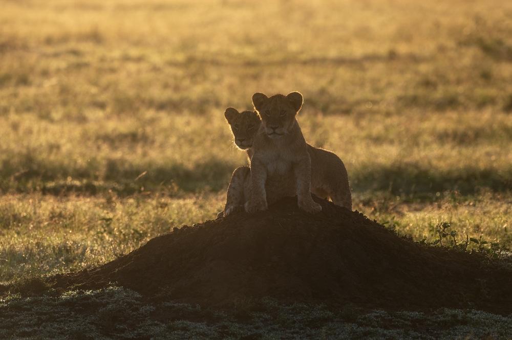 Blog Reisebericht Masai Mara