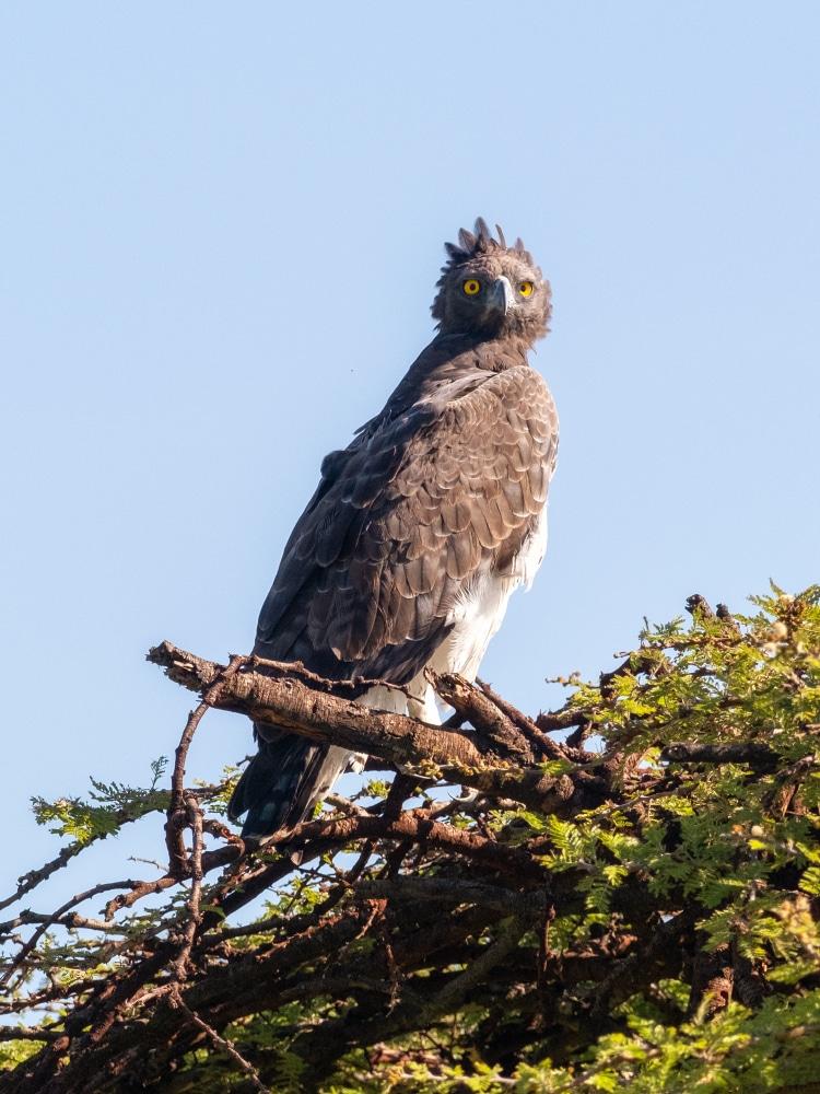 Fotoreise Masai Mara